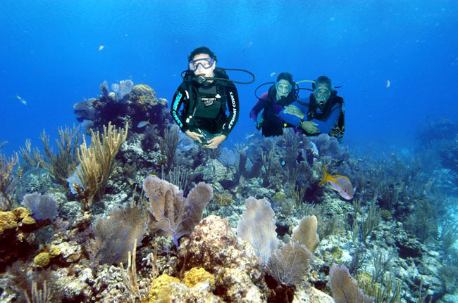 Discover SCUBA Diving And Beach Day